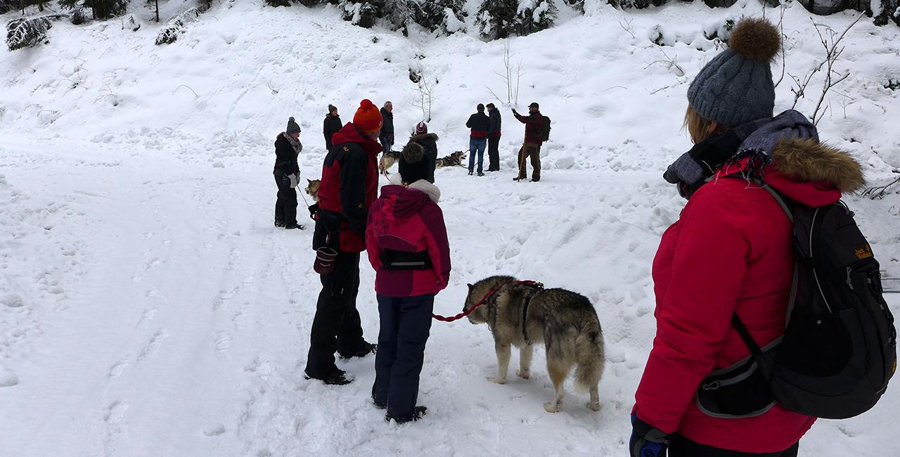 Dogtrekkingtour in Clausthal