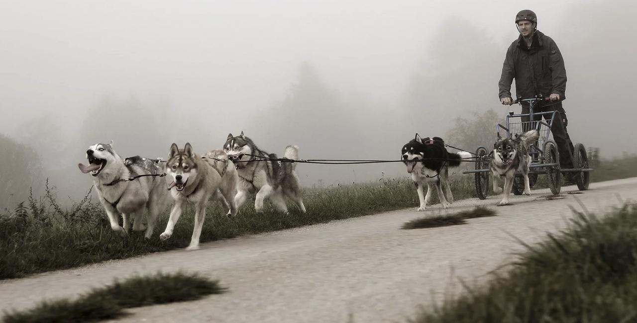 Schlittenhunde-Fahrt in Dietfurt