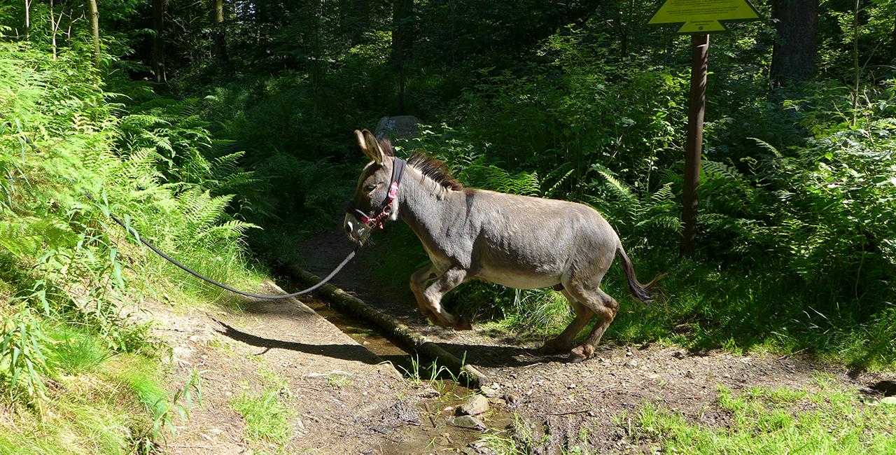 Esel-Tour in Heinade