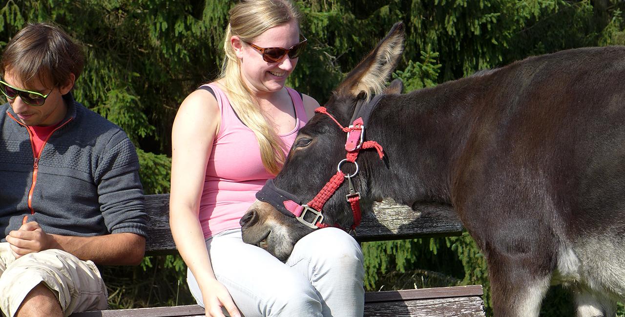 Esel-Trekking-Tour in Siersburg, Saarland
