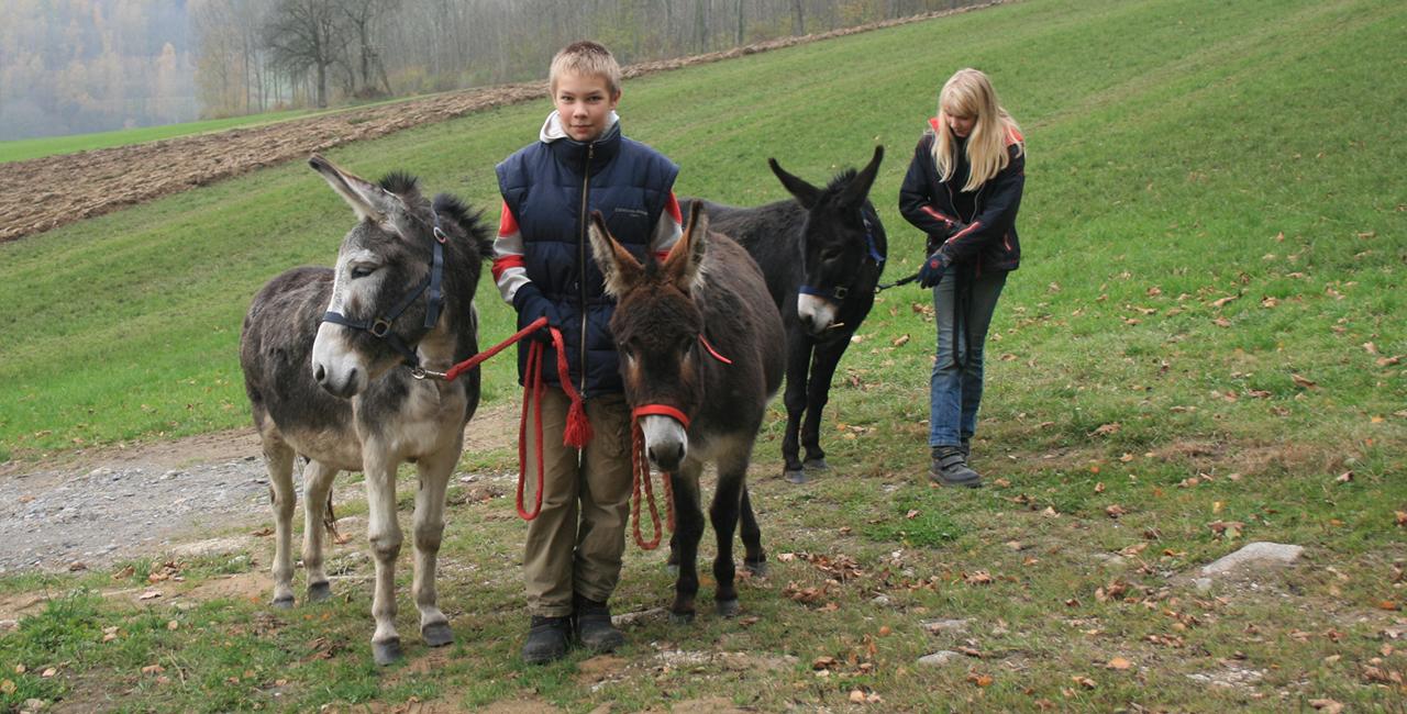 Esel-Trekking-Tour in Kollnburg