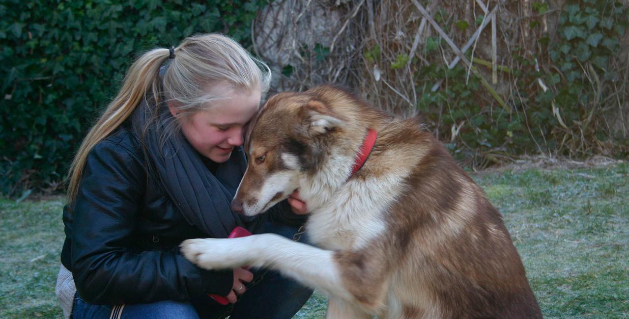 Husky Wochenende in Waldheim