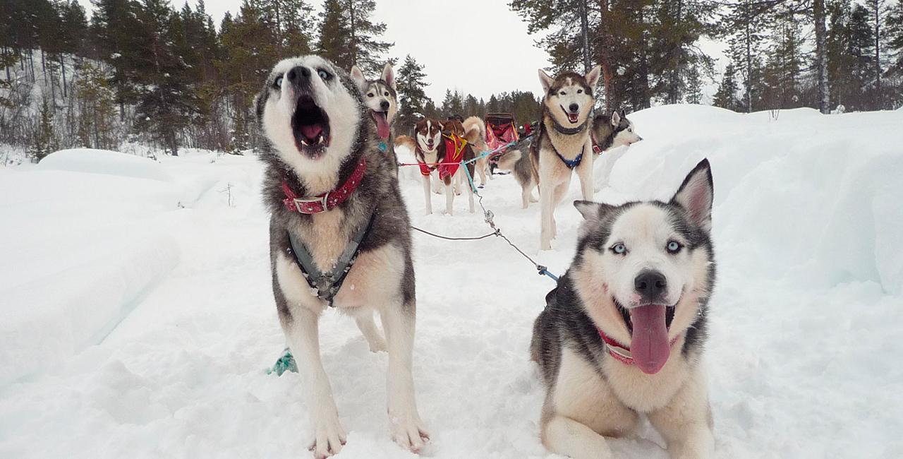 Schlittenhunde-Schnupperfahrt in Waldheim