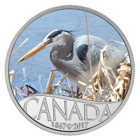 Kanada - 10 CAD 150 Jahre Kanada Kanadareiher 2016 - Silbermünze